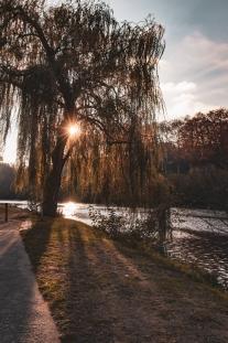 Les rayons de soleil passe au travers de l'arbre, Limoges